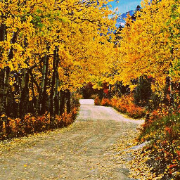 warm fall colorado home nature