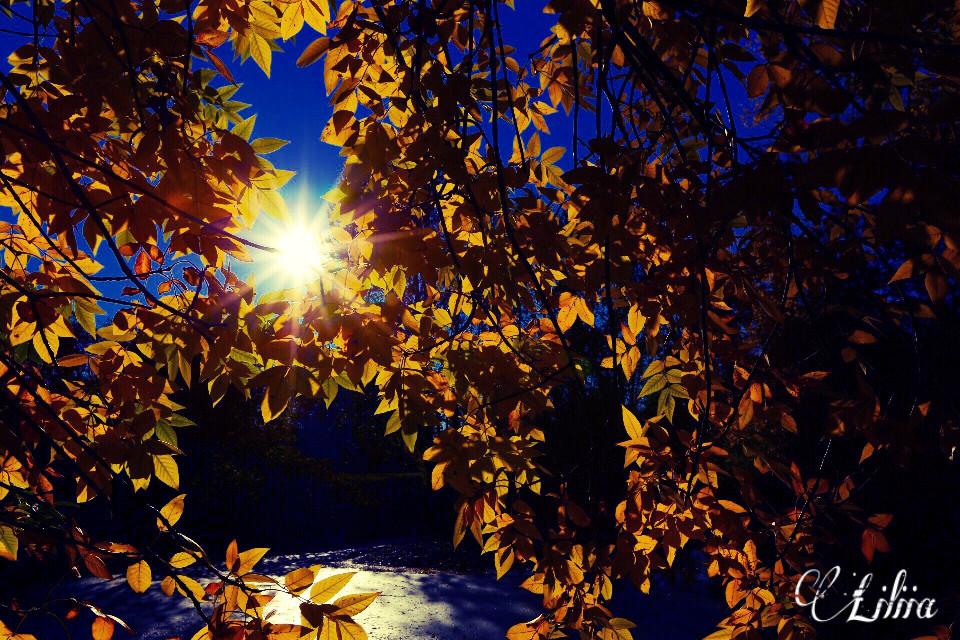 #nature #interesting #freetoedit #autumn