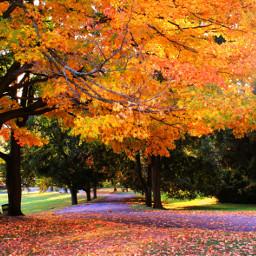 park autumn seasons fall kingcollection dpcleaves dpctrees dpcorange dpcfallfeels pcstreetcorner pctrees pcbeautifulday pcnaturephotography pccolororange pcintonature