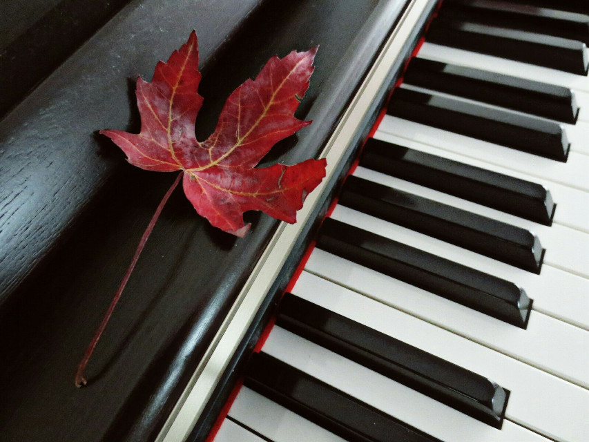 I am in need of music that would flow, Over my fretful, feeling fingertips, Over my bitter-tainted trembling lips. With melody, deep, clear and liquid slow. Oh, for the healing swaying, old and low.  ~ Elizabeth Bishop, I am in need of music.   #photography  #music  #red   #colorful  #wapautumn #leaf  #emotions