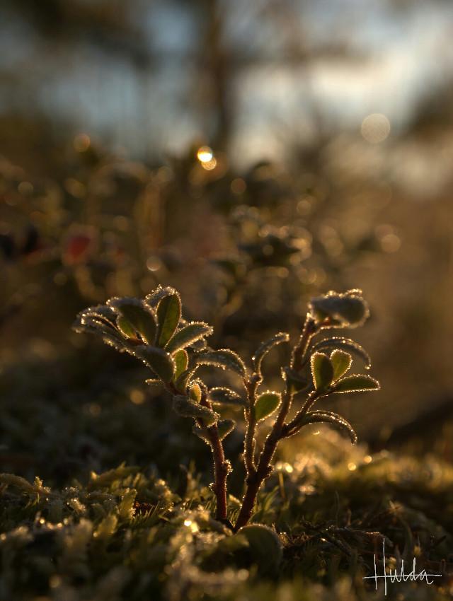 #autumn #noedit #frost #nature #closeups