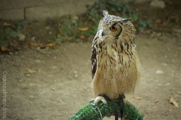 monasteriodepiedra zaragoza bird spain photography