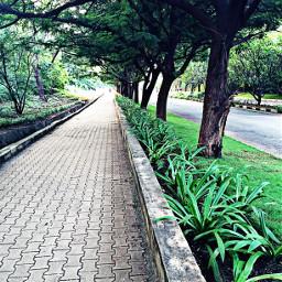 nature green travel trees plants