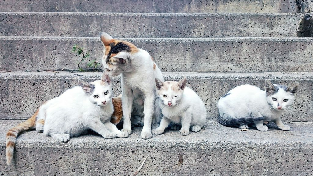 #stairs #animal  #cat  #mom #babys #love #care  <3