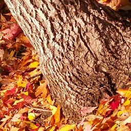 nature photography colorado fallcolors oakleaves