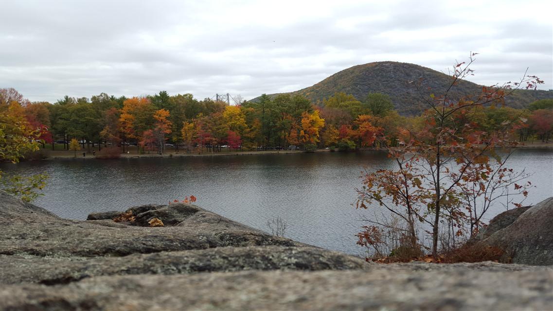 Fall 🍁🍂🍃🌳 #water #tree #nature #fall