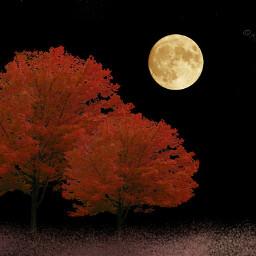 Autumn Night Beautiful