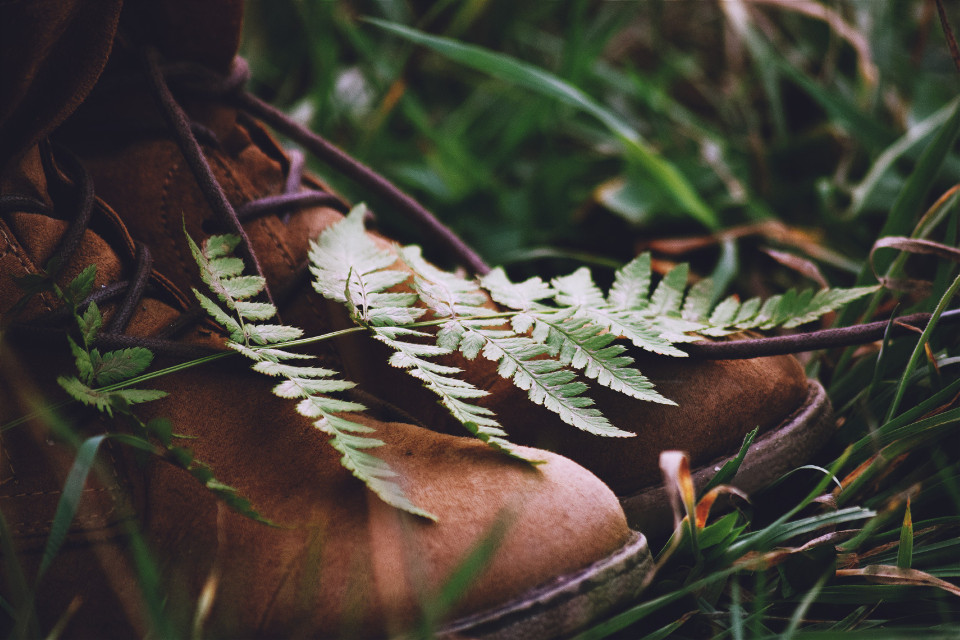 We're all falling and we need a place to hide. A safe place, somewhere in the Woods, we can start a fire.🍂🌿🔥  #intothewoods#forest#shoes#woods#folkgood