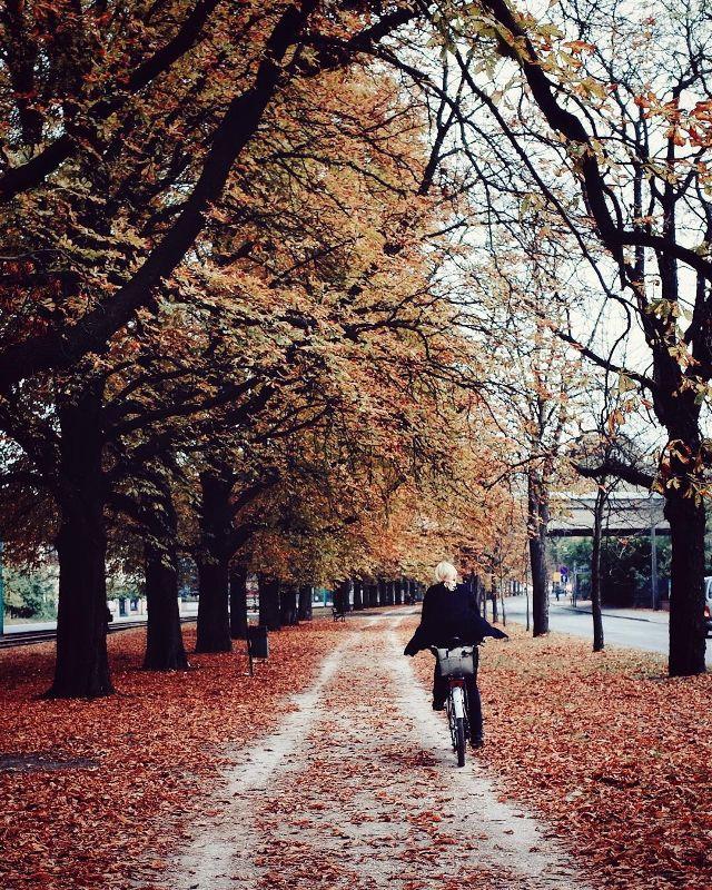 autumn photography Michal Koralewski