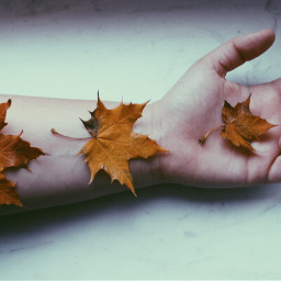 autumn fall leafs leaf halloween