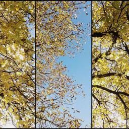 fall sun nature photography