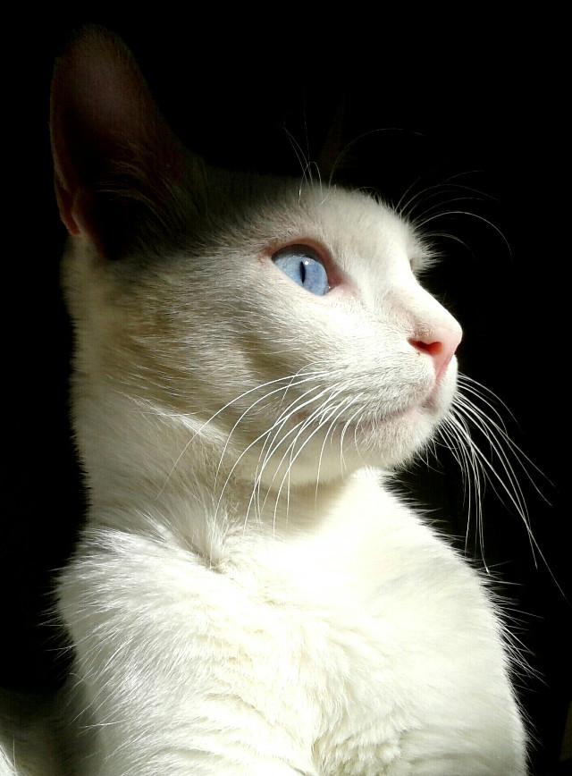 MercanBaba♥#cat  #cute