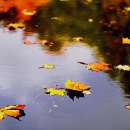 highcontrast nature freetoedit interesting autumn dpcleaves