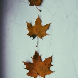 leaf leafs halloween fall love