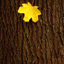 emotions nature au autumn