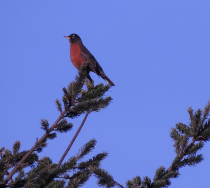 #photography #birds #nature