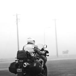 fogday nature blackandwhite
