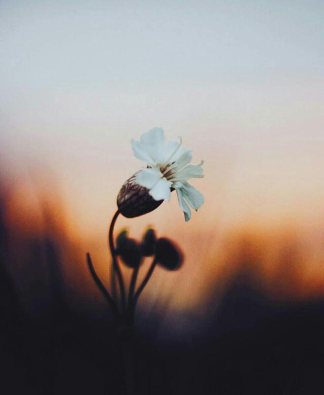 #colorsplash  #emotions #flower #hdr #nature #photography