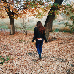 interesting autumn leaves fall colours