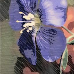 pastel flower nature