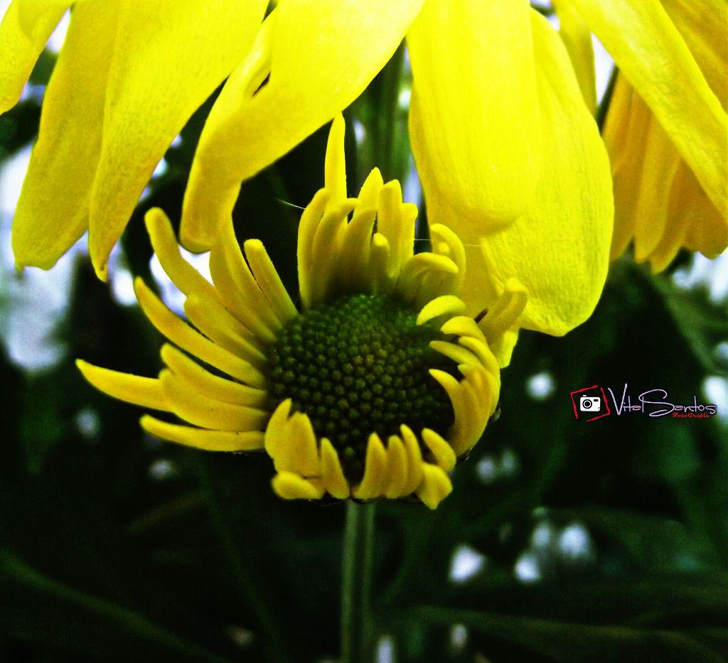 Minha foto! #nature #flower #hdr #photography #picsart