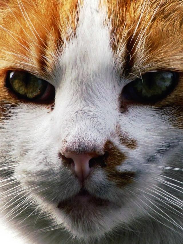 #closeup