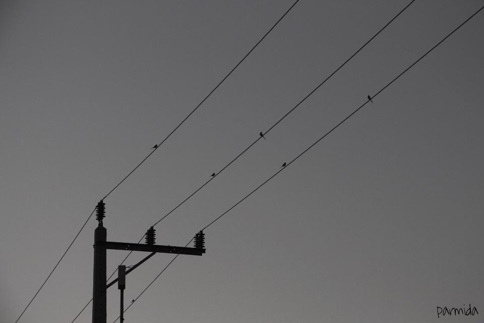 🌸  #interesting  #nature  #sky  #photography  #birds
