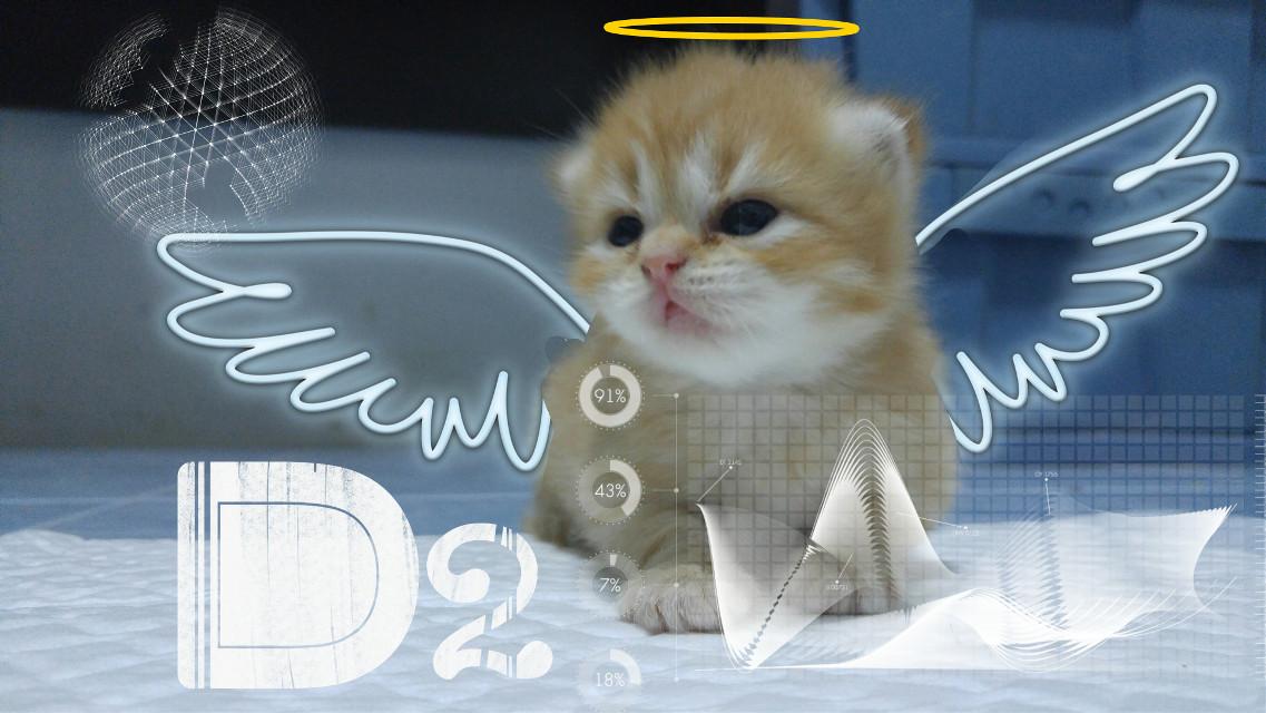 Kitten #kitten #บ้านแมวหนวด #แมว #cats #smile #joke #funny #cute #pretty #phuket #thailand #neko