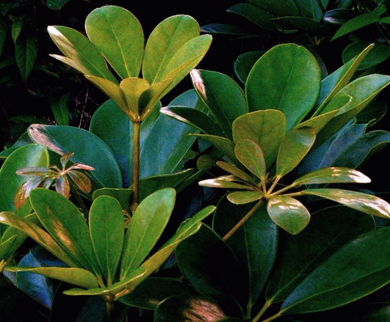#plants #nature #greenleaves