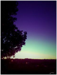 sunset tree silhouette art nature