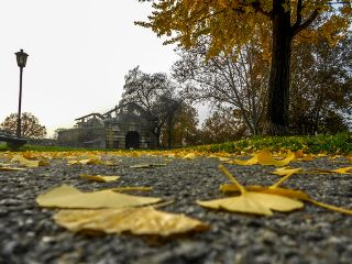 belgrade autumn yellow