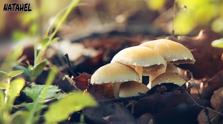 Good morning friends 👋😉   #photography #nature #freetoedit #fall