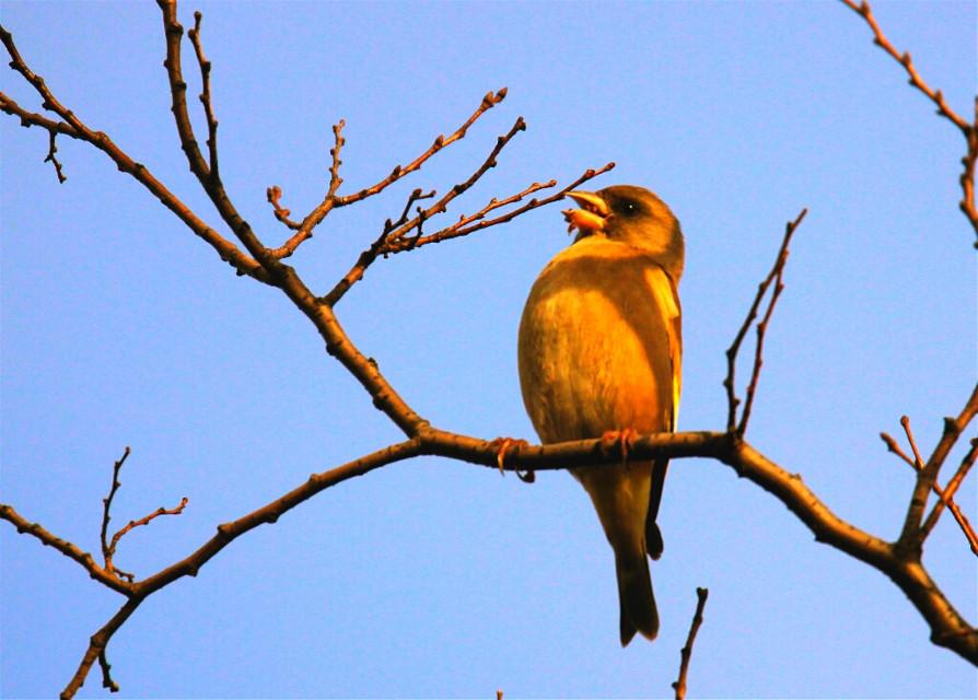 青空の中で餌さを食べる小鳥