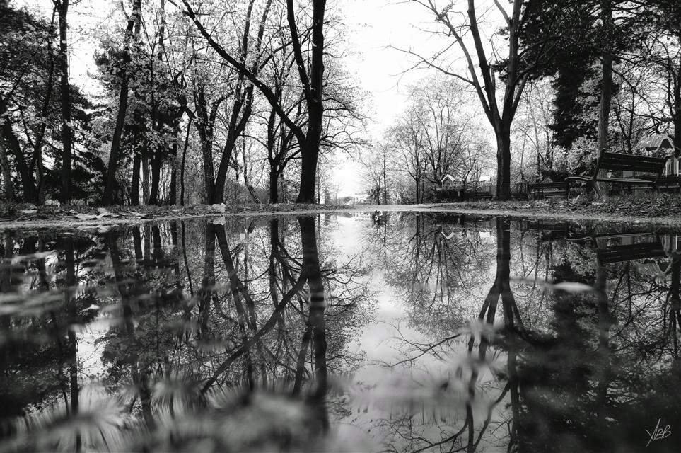 #reflection #park #nature #photography #black&white #monochrome #autumn #coldweather #winteriscoming #trees #rainyday #lyon #2015