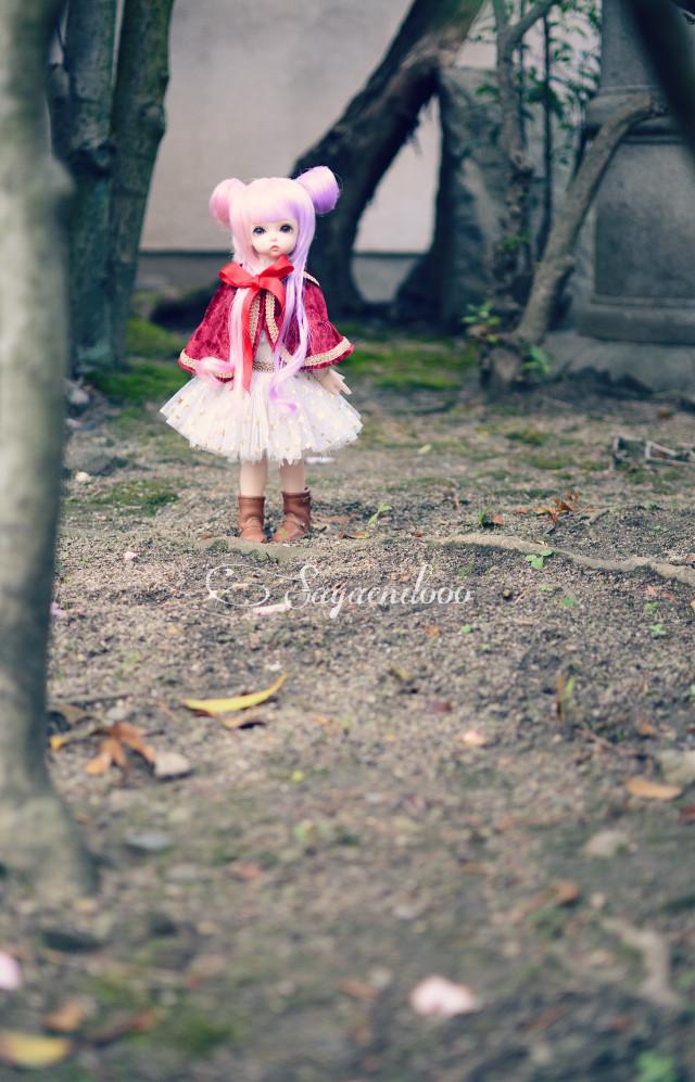 Dollphoto