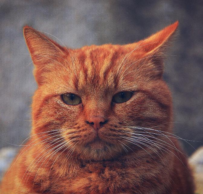 Günaydın... Good morning.. Buongiorno.. Buenos días..    #goodmorning #cat #animal #petsandanimals #photography