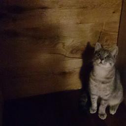cat look eyes wall wood