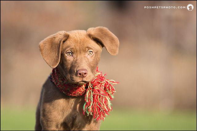 dog picrtures