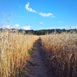 kharkov field suburb харьков wheat