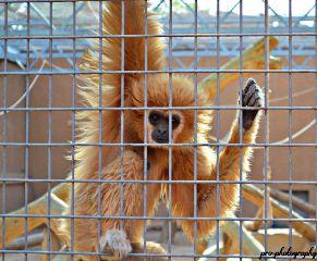 summer photography monkey thezoo travel