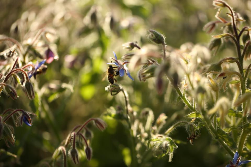#freetoedit #nature #flower #flowers