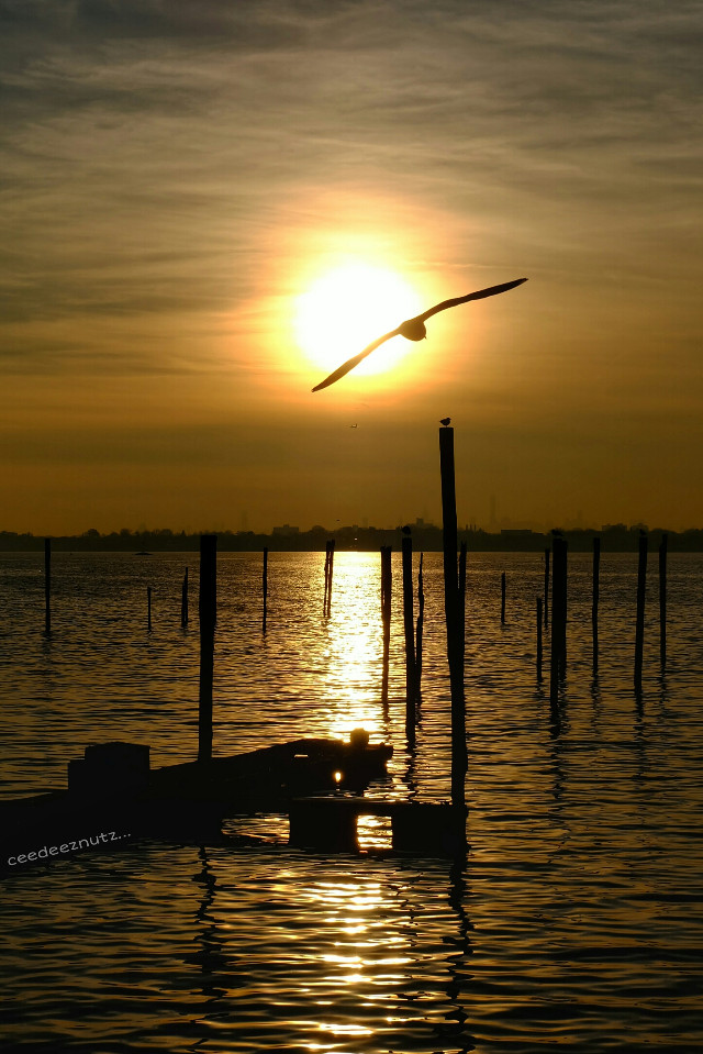 Good morning and afternoon everyone. Enjoy your Monday and don't ever stop thinking of that weekend that's about to come up. This pic is for the one that I think of at the end of my day.  #gold  #beach #emotions #nature #petsandanimals #photography #fall #sunset