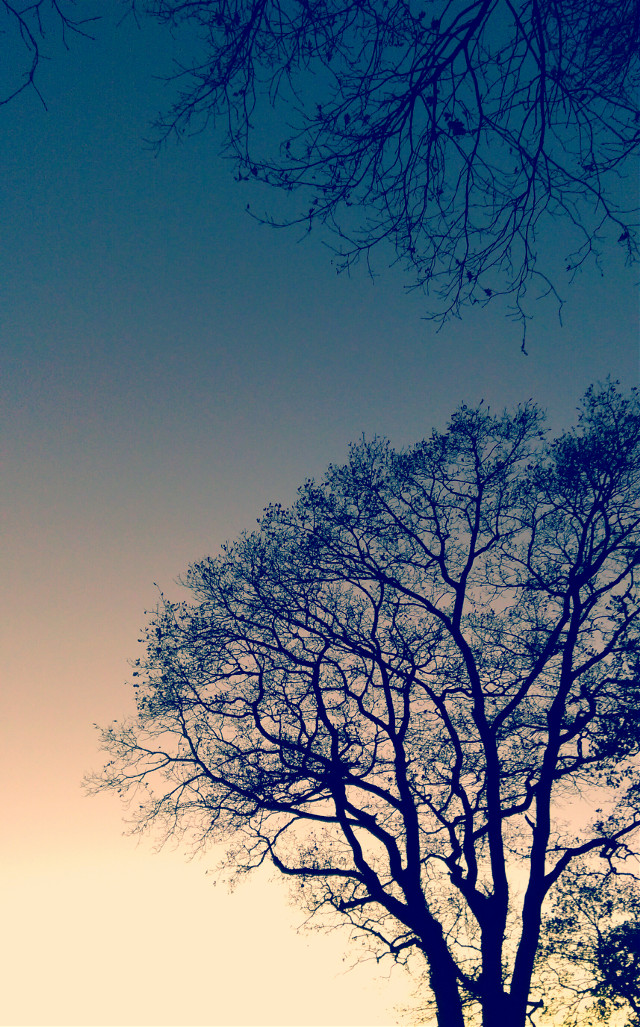 #photography #tree #trees  #nature #evening #sungodown #lonleytree