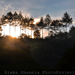 gold morning nature photography summer