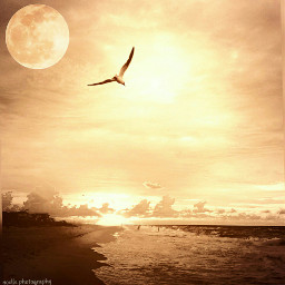 gradient moon shoreline beach amber