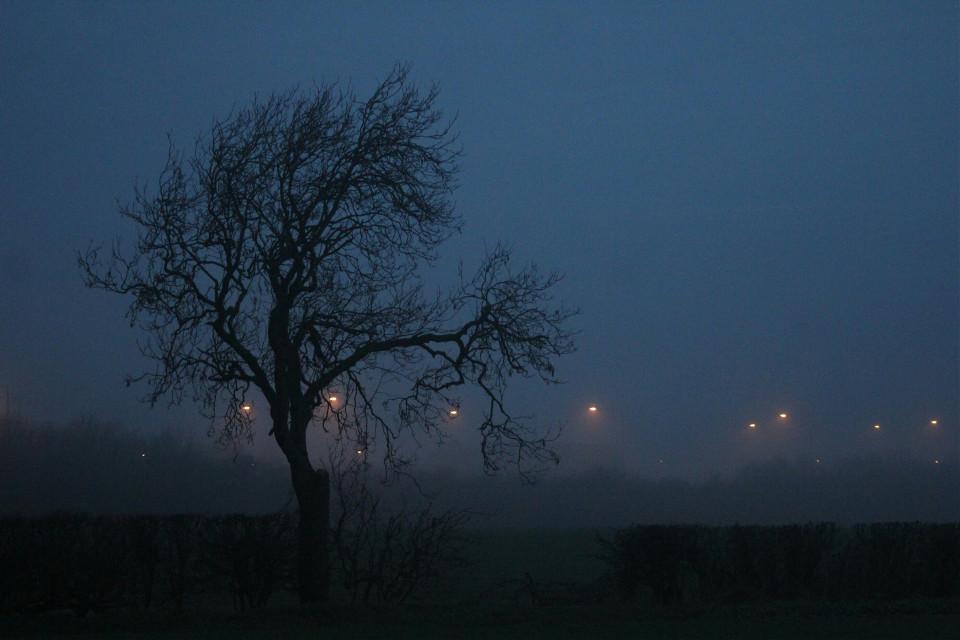 #nofilter  #straightfromthehorsesmouth #tree #misty #morningwalk  #photography