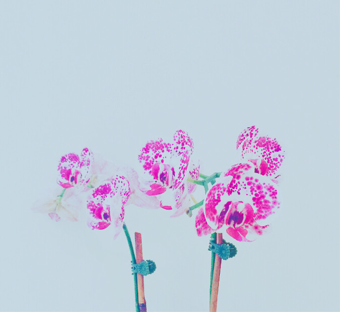 #flower #interesting #photography #orchid