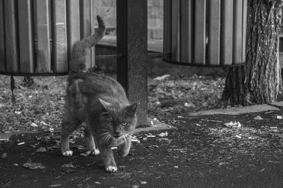 this cat was angry on me and my camera..but whatever 🐱🐱🐱📷 #photography #arpikhachaturyanc  #street  #cat