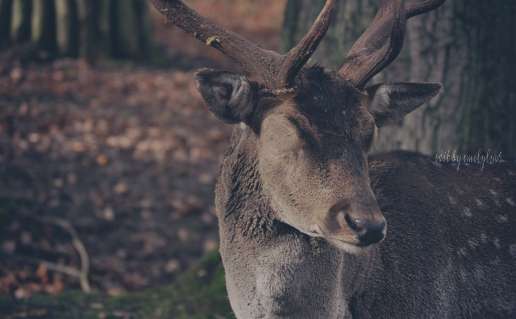 #deer #edit #eyeless #eyes #forest #woods #wild