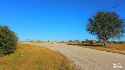 texas country landscape